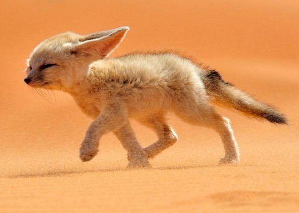 这是什么动物,很可爱!