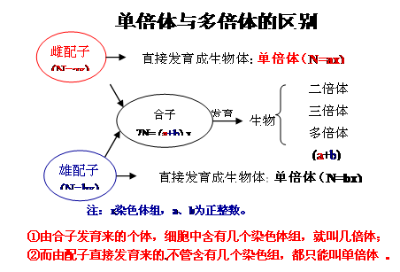 人教版必修2 生物刚章节知识结构网络图