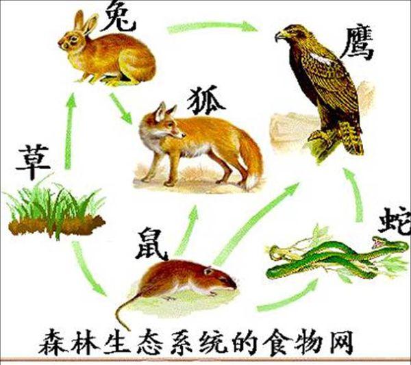 题目: 一个草原生态系统中有草、兔、鼠、蛇、狐、鹰等生物,请回答下列问题1.画出该生态系统的食物网简图2.从生态系统中能量流动的特点分析,数量最多的生物是( ),数量最少的生物是 ( )3.绘图所示生物网中的生物能不能够成一个生态系统( )为什么( ) 解答: 1、 2、最多的是草,最少的是鹰 3、缺少非生物的物质和能量和分解者  名师点评: vlgaasuq