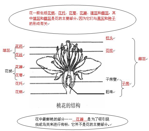 题目: 花的结构?每个结构的作用? 花的传粉途径?过程? 如何区分自花传粉和异花传粉? 花形成果实后,它的每个结构都会有怎样的变化? 什么是单性花?  解答: 解题思路: (1)位于花冠外面的绿色被片是花萼,花萼是一朵花中所有萼片的总称,包被在花的最外层,它在花朵尚未开放时,起着保护花蕾的作用。 (2)按雌蕊和雄蕊的状况,花可以分为两种:一朵花中,雄蕊和雌蕊同时存在的,叫做两性花,如桃、小麦的花。一朵花中只有雄蕊或只有雌蕊的,叫做单性花,如南瓜、丝瓜的花。花中只有雄蕊的,叫做雄花;只有雌蕊的,叫做雌花。雌