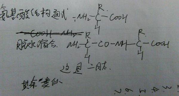 二肽,三肽,四肽结构图怎么画