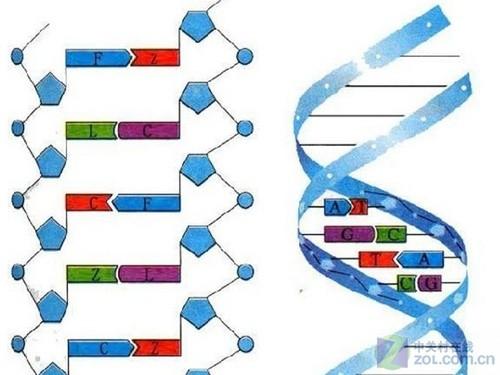 糖的分子结构图