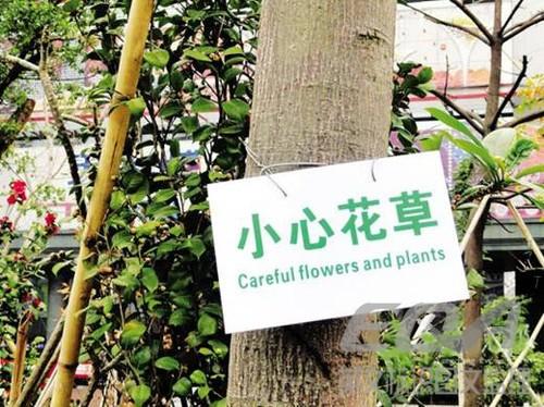 关于植物的英语板报