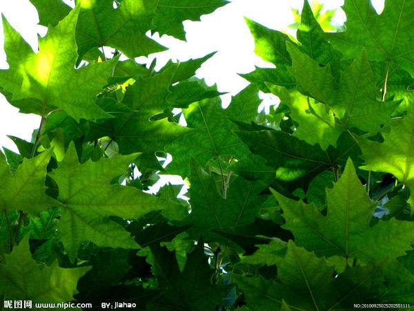 与《法国梧桐树夏天长什么样,是夏天!》相关的作业问题
